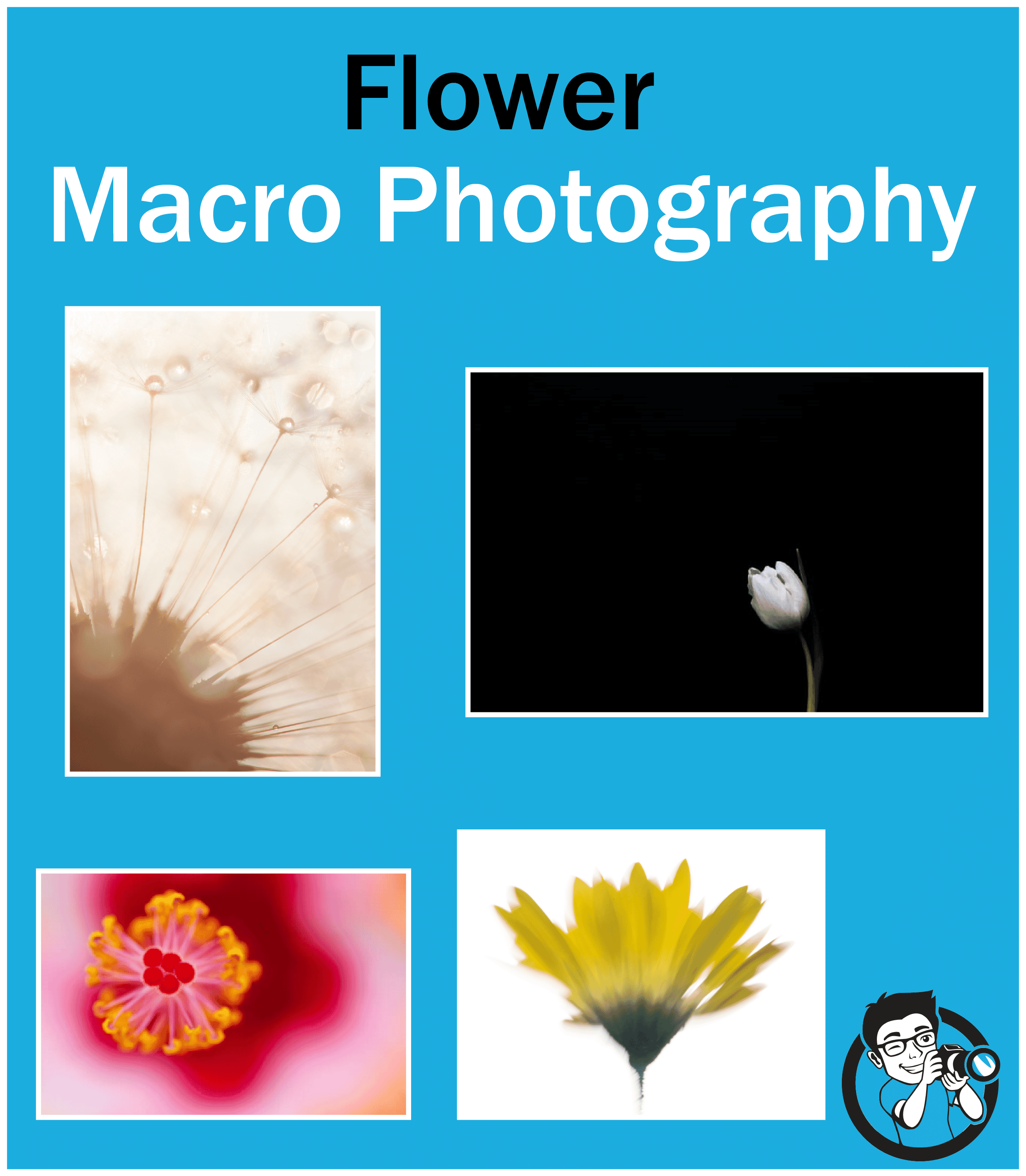 Flower Macro Photography: 10 Tips for Amazing Flower Photos