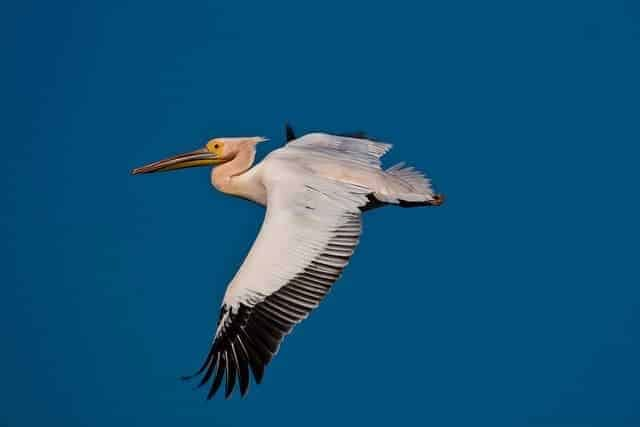 How to shoot a flying bird with a telephoto lens