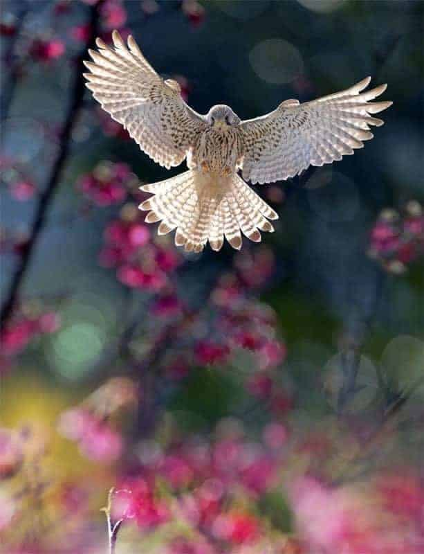 How to photograph flying birds: Backlight