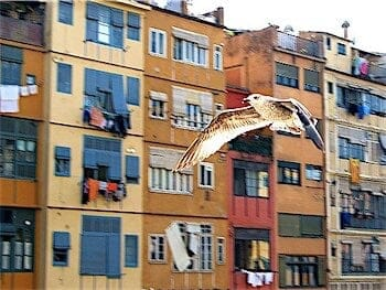 Shooting a flying bird with a compact camera
