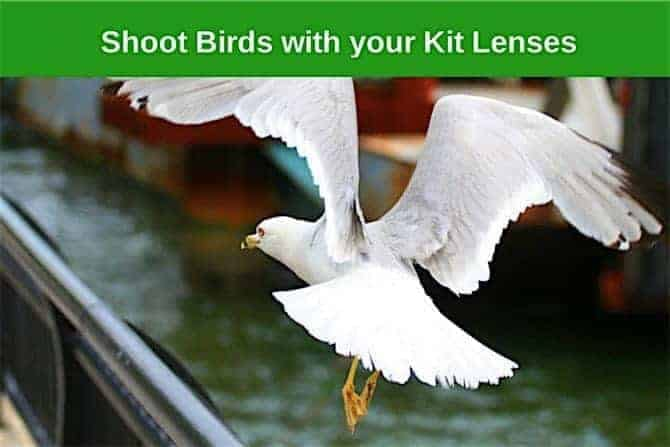 How to Photograph Flying Birds with a Kit Lens