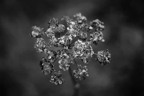 melancholy mood by Philipp Antar