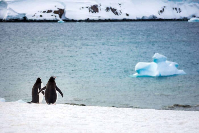 Antarctica Photo Tip: Get a Zoom lens to capture the Wildlife