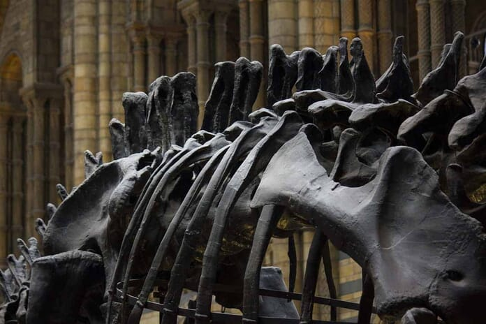 Best Places to Photograph in London - Natural History Museum