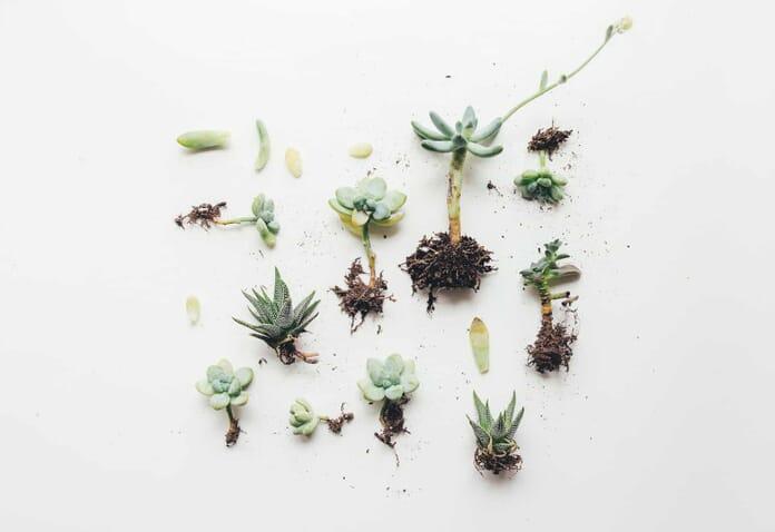 succulent flat lay