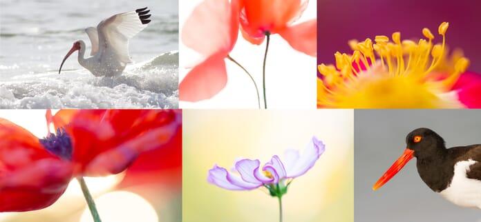 edit photos composite