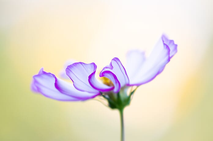 learn to edit photos cosmos