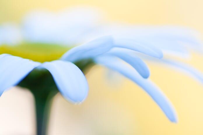 global adjustment daisy