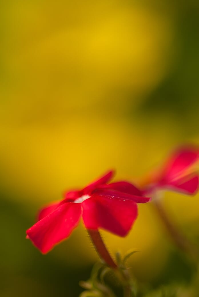 macro photo with blurred background from shallow depth of field