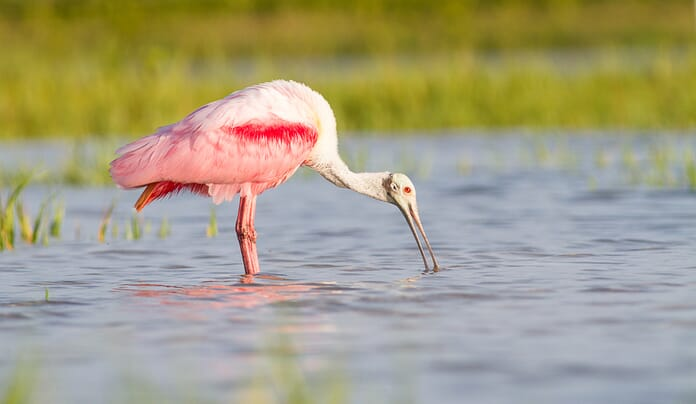 learn photography using appropriate shutter mode to capture stunning bird image