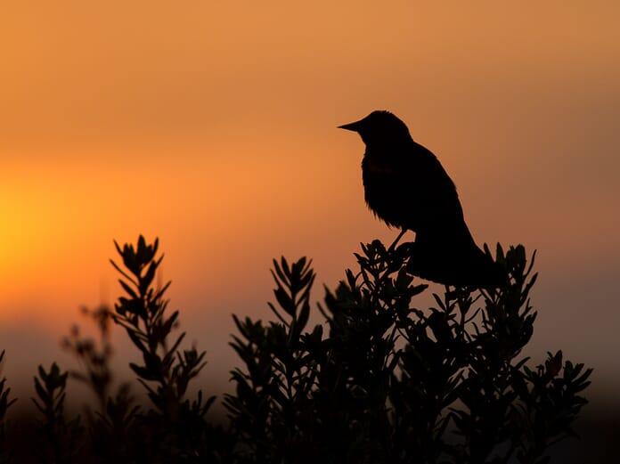 backlit bird image