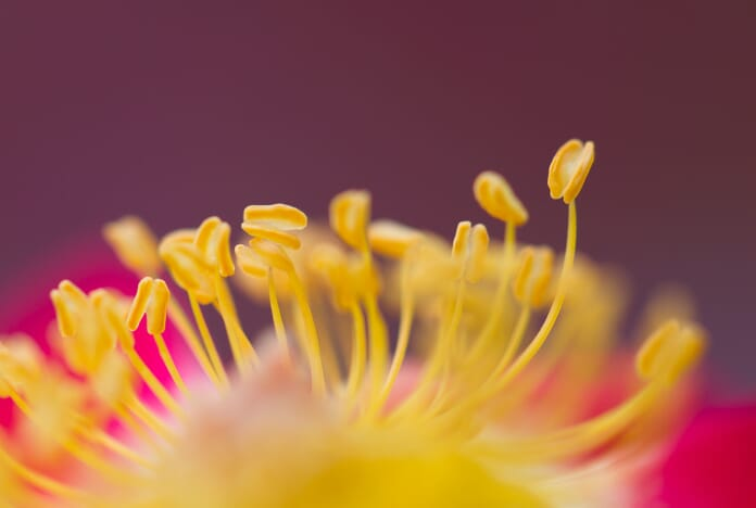 macro photograph sharp