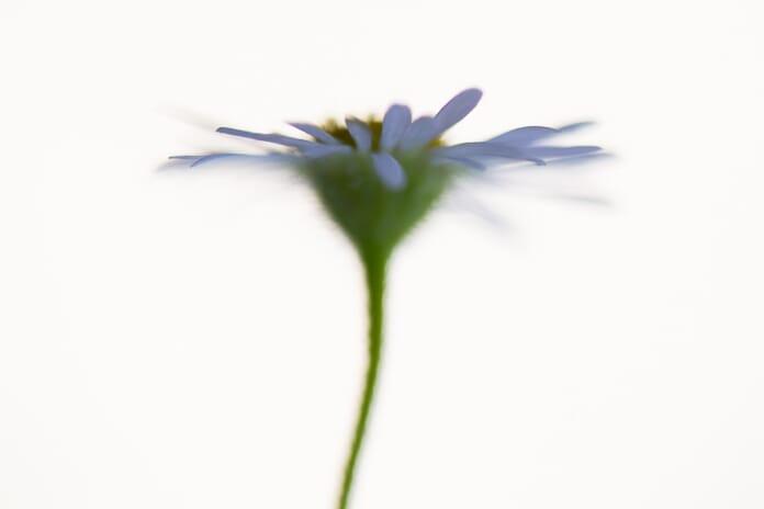 unique angle of macro flower