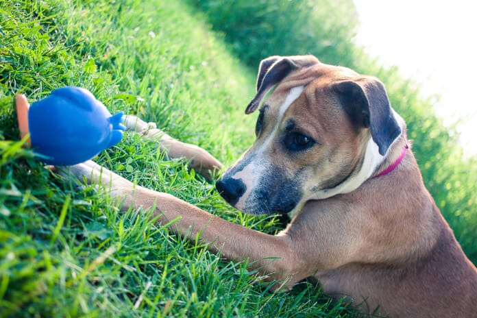 pet photograph of a dog with toy