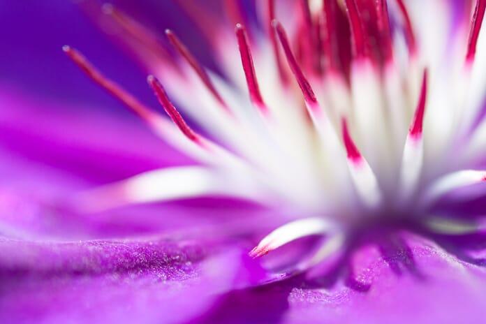 sharp image of flower center