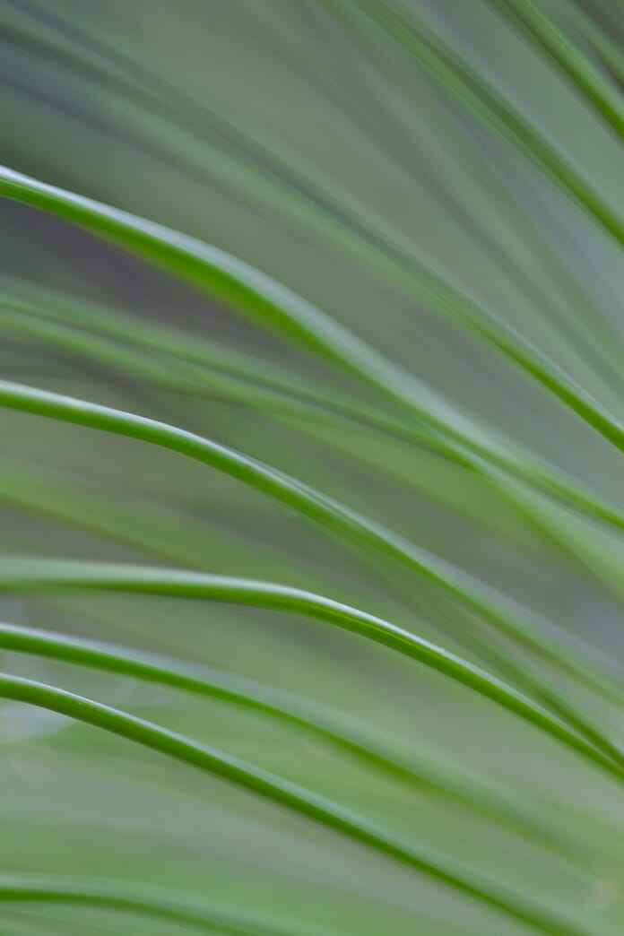 grass abstract macro photography idea
