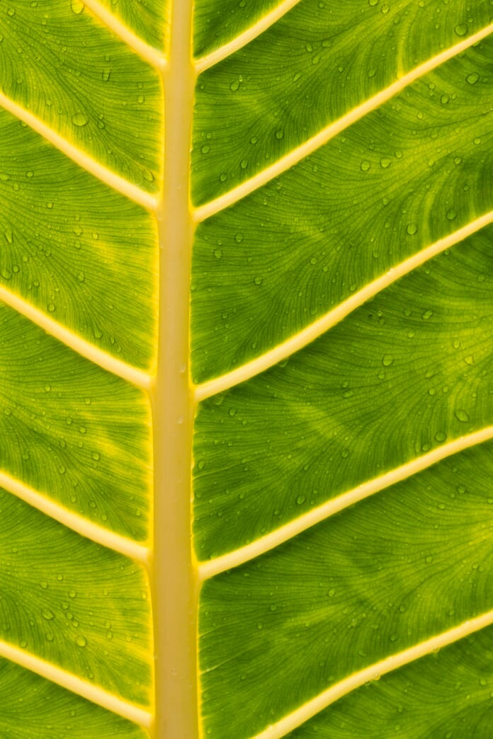 leaves close up macro photography ideas