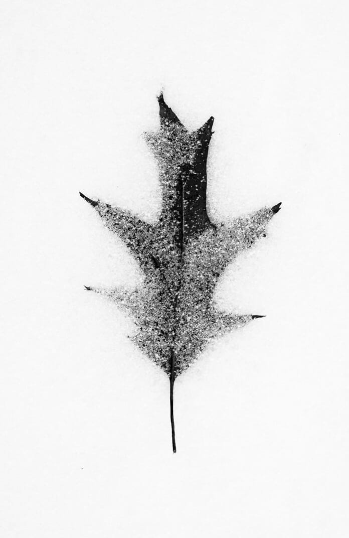 black and white leaf in snow macro ideas
