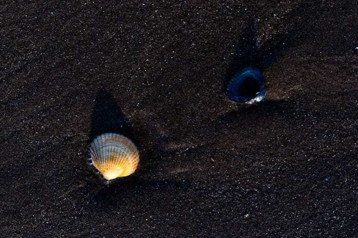 two shells on beach