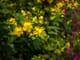 Master aperture priority - flowers