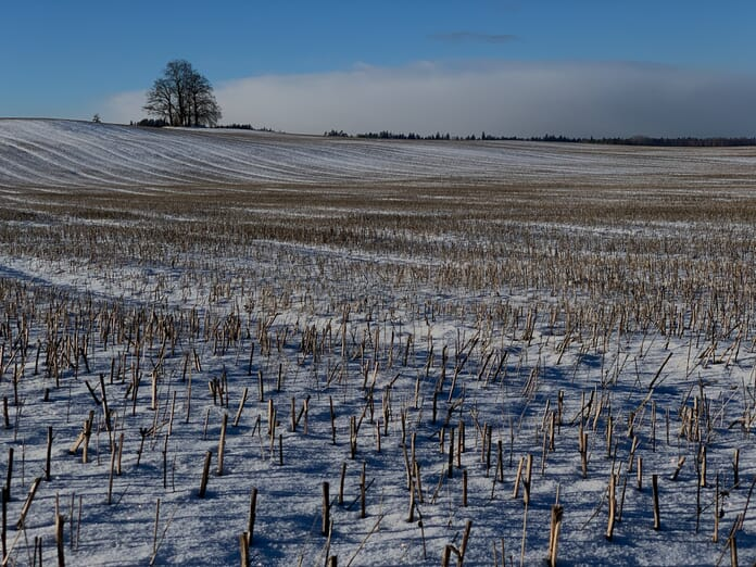 fields Sharp smartphone photography