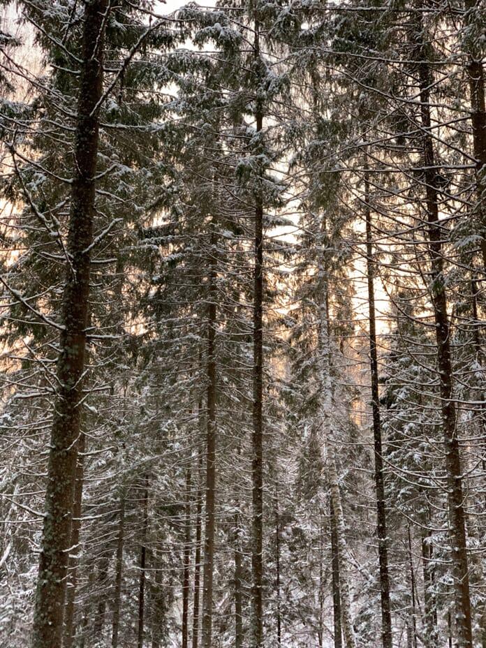 Trees Smartphone Photography