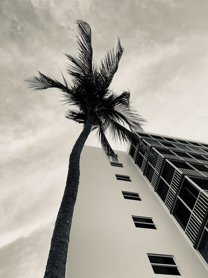 Palm tree composition smartphone photo