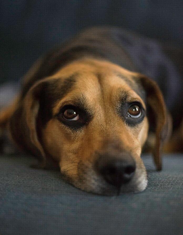 dog photography eyes