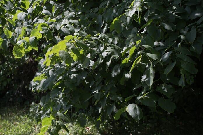 foliage without a polarizing filter
