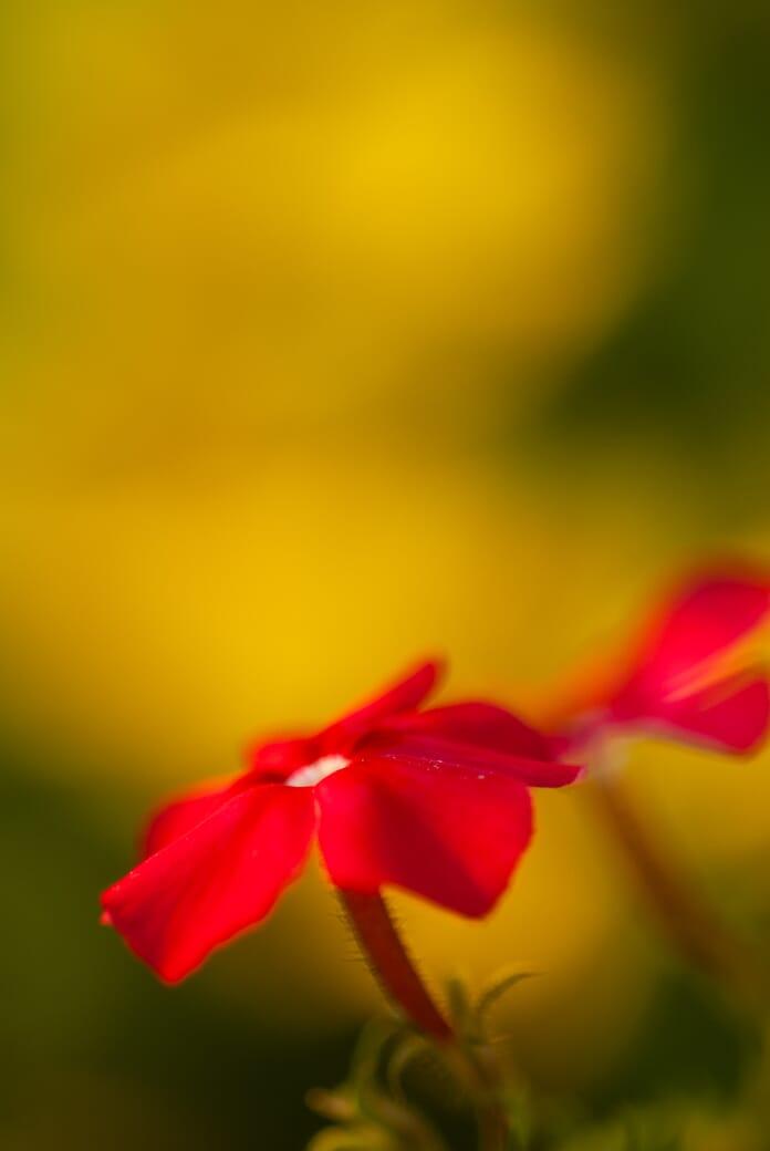 golden-hour frontlight flowers