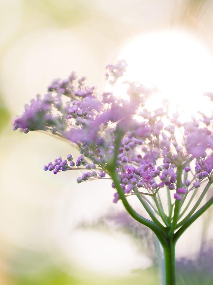 backlit flower macro photography lighting