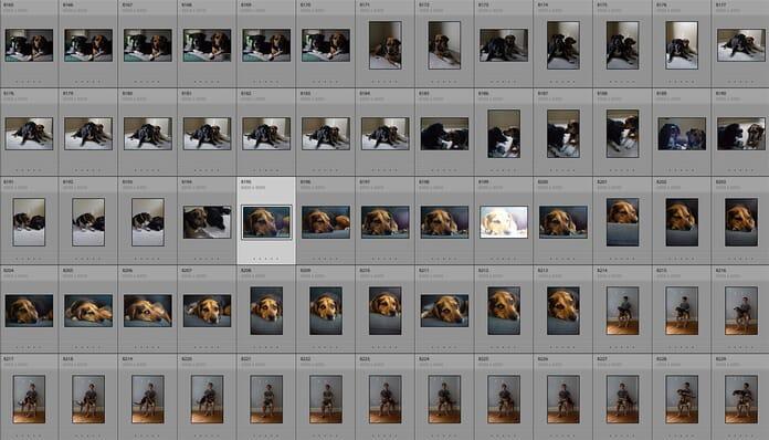 pet portrait session contact sheet