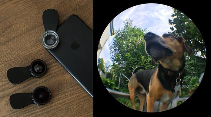 pet portrait perspective experiment